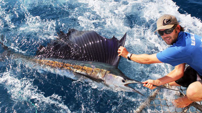 Blue Lightning Sailfish