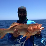 Coral Trout Montebello Islands fishing picture
