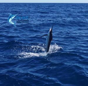 Sailfish 7 day fishing charter