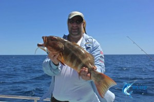 Coral Trout Blue Lightning Charters