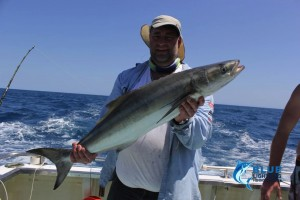 cobia Monties fishing charter