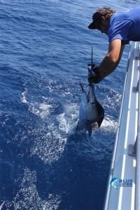WA fishing charter sailfish