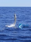 Private group charter sailfish