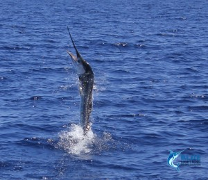 sailfish private group charter
