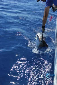 private group charter Gamefish
