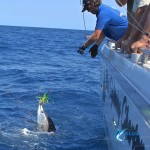 Sailfish Fishing WA