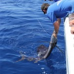 Chad Mills Sailfish