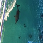 Dolphins Abrolhos Islands fishing