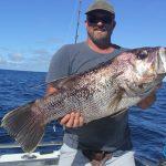 dhu fish Abrolhos Islands WA