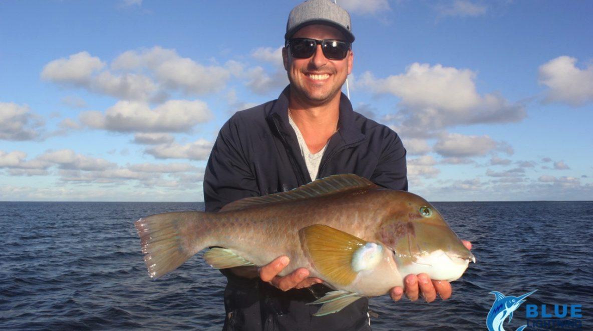 Baldchin grouper Abrolhos Islands WA fishing adventure