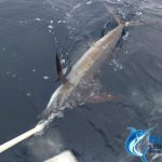 Blue Marlin Montebello Islands WA fishing charter