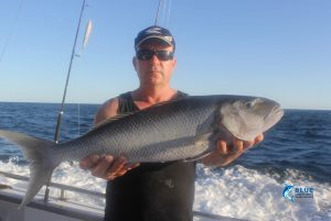 Green Job Fish WA fishing charter Blue Lightning Charters