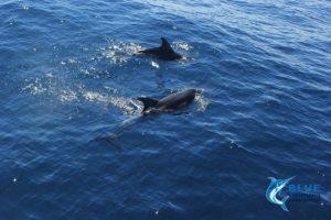 Dolphins Montebello Islands WA Blue Lightning Charters