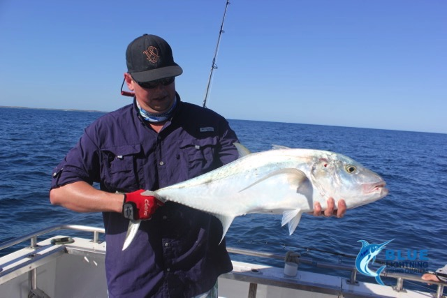 trevally montebello islands wa fishing charter blue