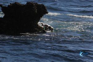 Shark Mackerel Montebello Islands WA fishing Charter