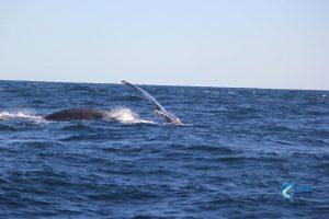 Montebello Islands WA fishing Charter Blue Lightning