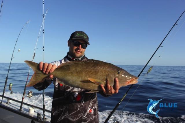 Ray long nose emperor montebello islands wa fishing for Wa fishing charters