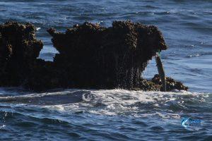 Shark Mackerel WA fishing charter Montebello Islands