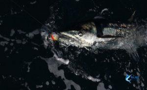 Montebello Islands WA fishing charter