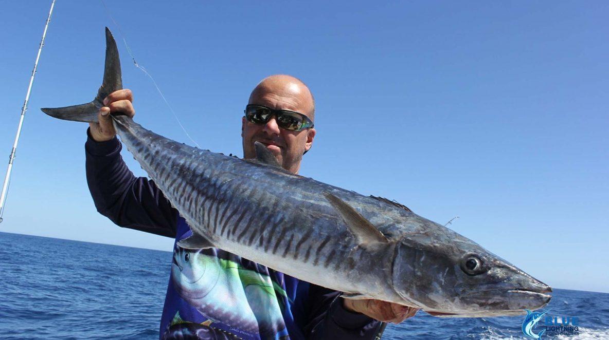 Spanish Mackerel Blue Lightning Charters WA's best fishing charters Montebello Islands