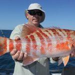 Chinaman fish Montebello Islands WA Fishing Blue Lightning Charters