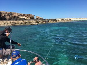 Crayfish Blue Lightning Charters WA's best fishing charters Montebello Islands