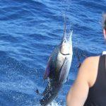 Sailfish Montebello Islands Blue Lightning Charters
