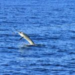 Montebello Islands Blue Lightning Charters