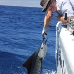 Sailfish WA Fishing Charter