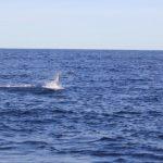 Whales WA Fishing charter