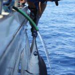 Billfishing Montebello Islands fishing charter Blue Lightning Charters