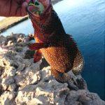 Coral Trout WA fishing charter