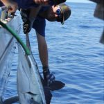 Stripe Marlin Montebello Islands WA fishing charter Billfishing Blue Lightning Charters