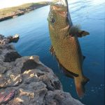 Alpha Island WA fishing charter Coral Trout
