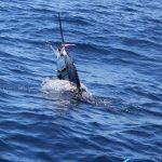 Sailfish WA Fishing charter