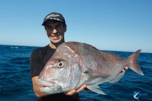 Pink Snapper expert fishing charters novice
