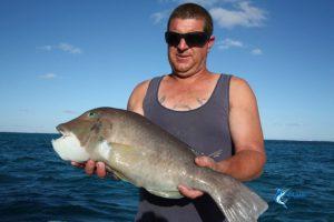 Baldchin Groper Abrolhos Islands fishing charter