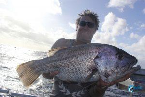 dhu fish Blue Lightning Charters Abrolhos Islands