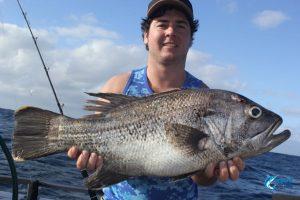dhu Fish abrolhos islands blue lightning fishing charters