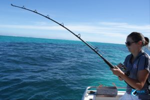 bent rod Abrolhos Islands WA