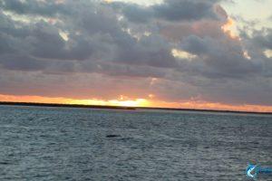 Abrolhos Islands Blue Lightning fishing charters