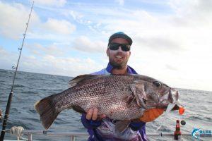 Abrolhos Islands dhu fish