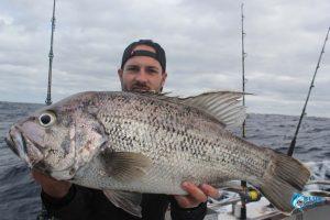 dhu fish abrolhos islands fishing blue lightning charters
