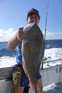 baldchin groper Abrolhos Islands WA