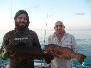 coral trout abrolhos islands wa fishing charter