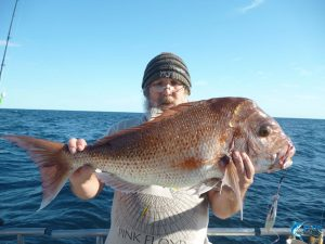 Pink Snapper Abrolhos Islands Blue Lightning fishing charters Chad Mills
