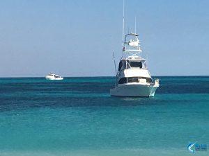 Reely Black Blue Lightning Charters Black Watch Tuna Tower