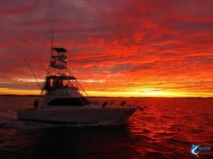 Reely Black WA sunset ocean