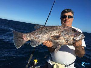 Dhu fish abrolhos islands