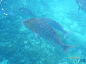Abrolhos Islands WA live aboard fishing charter